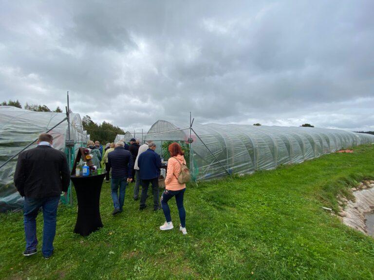 Veinimäe-kasvuhooned-Eesti-Veinitee