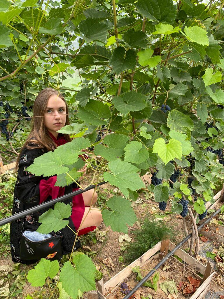 Veinimäe-kasvuhoones-Eesti-Veinitee